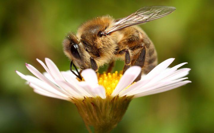 Бипин и бипин т в чем различие, как правильно бипинить пчел?