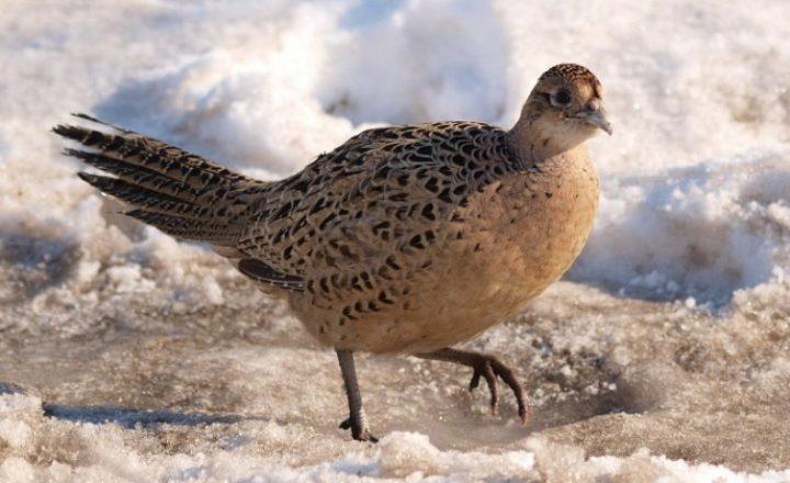 Птица зима