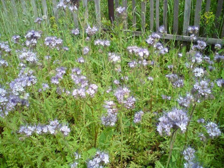 Внешний вид растения