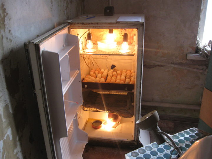 Как сделать инкубатор своими руками в домашних условиях из холодильника