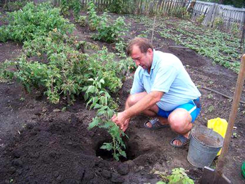 Сажать ягодные кустарники осенью 338