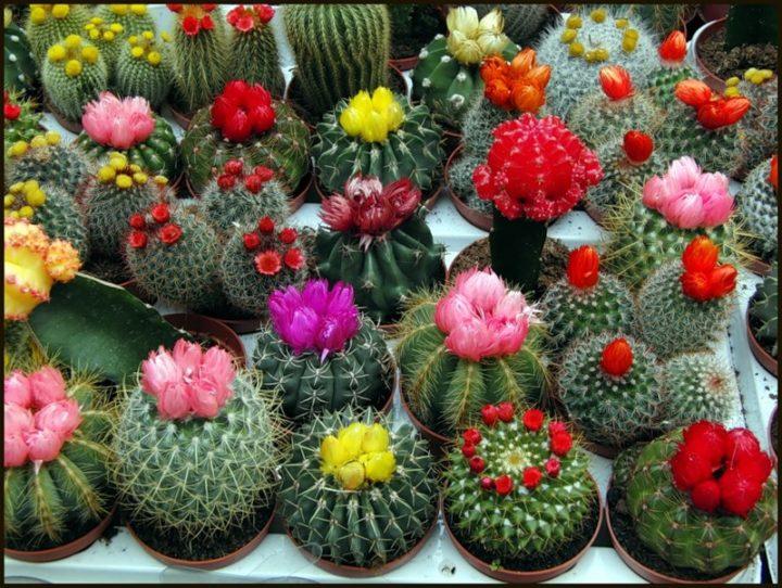 Как ухаживать за кактусами в домашних условиях для начинающих 148