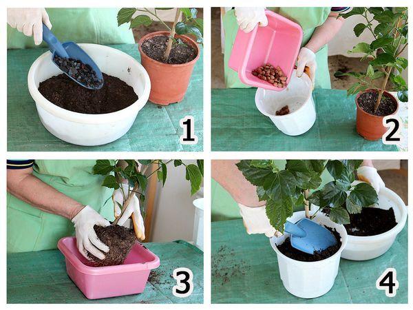Как сажать комнатные цветы в горшок 170